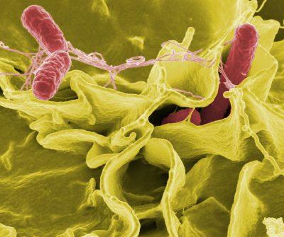 bacteria, salmonella, pathogens, water testing lab wisconsin cdc, dnr wdatcp